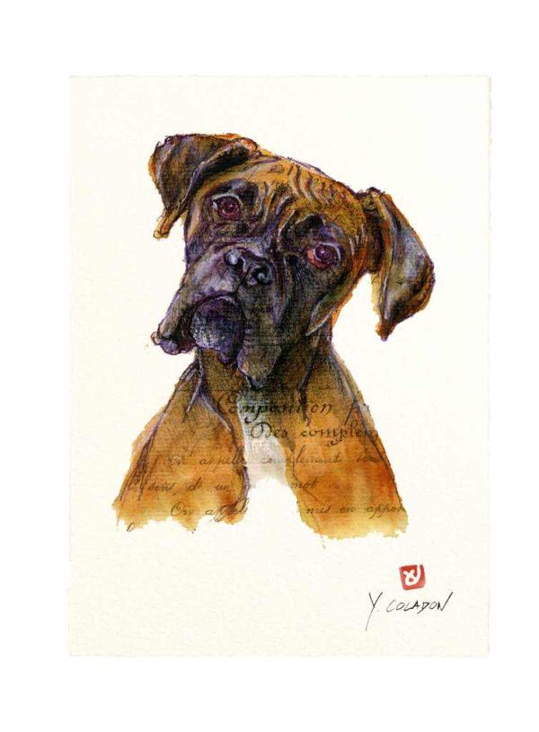 Carte postale. Boxer, aquarelle, Yves Coladon artiste peintre graveur